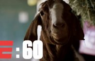 The-Derby-Horses-And-Their-Barnyard-Buddies-E60-ESPN-Archives-attachment