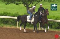 Will-the-Kentucky-Derby-kick-off-a-pursuit-for-a-triple-crown-attachment