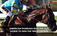 This-horse-will-chase-immortality-at-Preakness-attachment