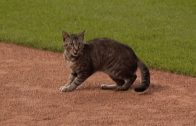 SEA@KC-Feline-takes-field-in-Mariners-Royals-5th-attachment