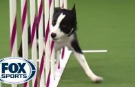 Watch-Border-Collie-Tex-Win-2015-Masters-Agility-Championship-FOX-SPORTS-attachment